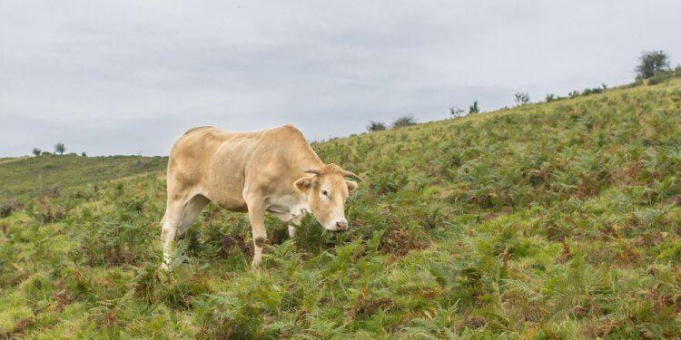 prawa zwierząt francja referendum