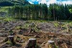 OZE wycinka biomasa
