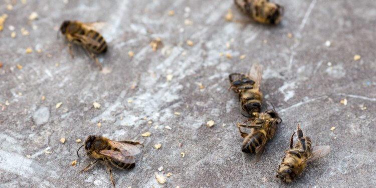 pszczoły pestycydy ardanowski