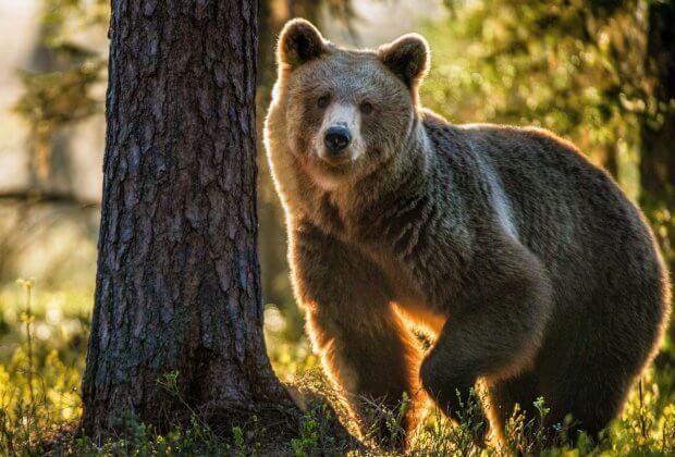 Niedźwiadek ratunek