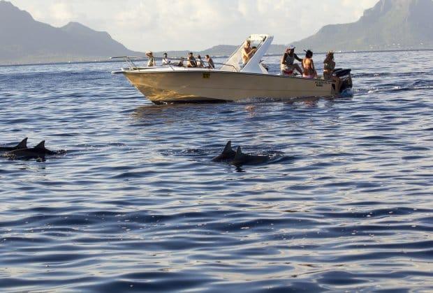 Delfiny Mauritius ropa