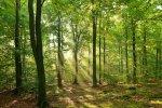 Polskie lasy wycinka