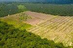 plantacja las