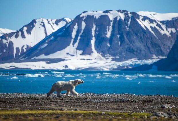 Lodowiec Svalbardu