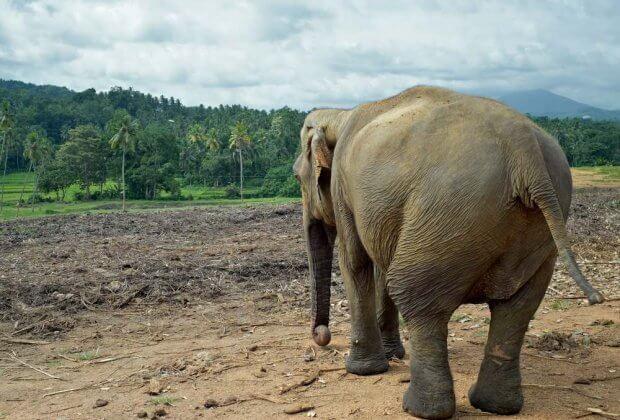 Słoń zoo