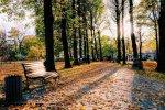 liście korzyści ekologia