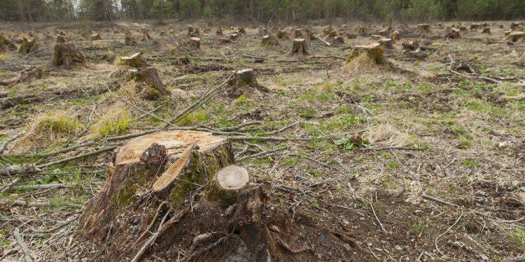 lasy państwowe raport