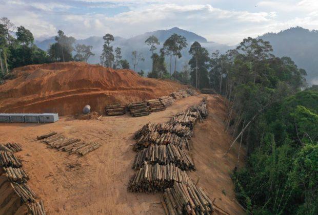 Wycinka Amazonia