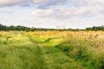 dzikie pola