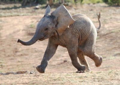 Słoniątko Baby Boom