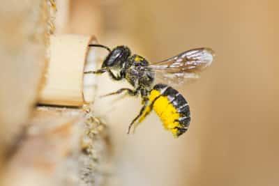 Bioróżnorodność Ochrona