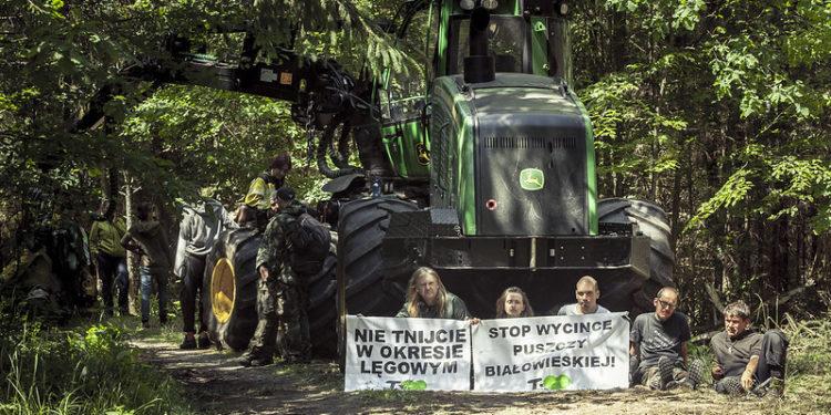 puszcza białowieska wycinka komisja europejska