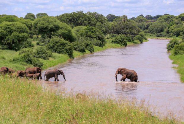 słonie w rzece