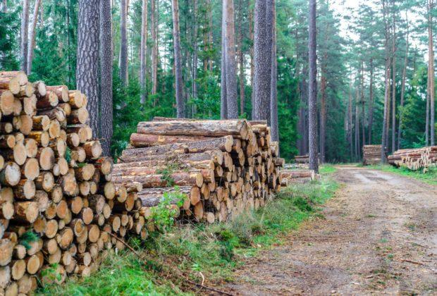 Wycięte drzewo las