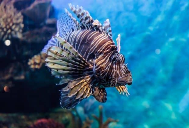 Ryba morska