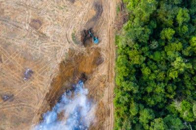 wycinka w amazonii