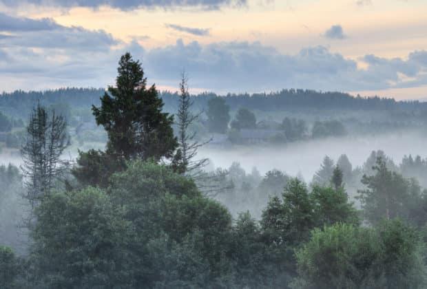 prywatyzacja lasów