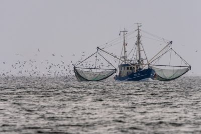spożycie ryb na świecie