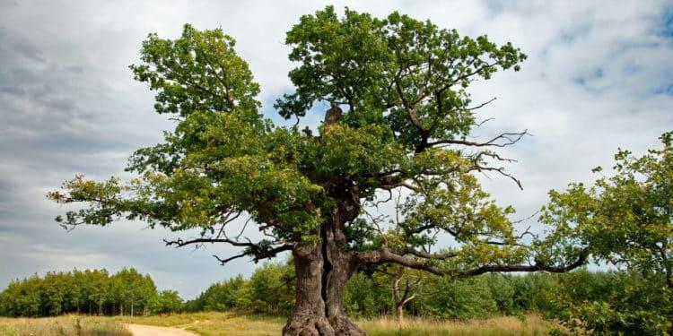 drzewo roku 2021
