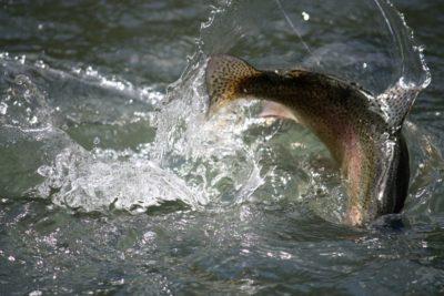 Ryby uzależnione od narkotyków