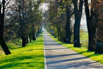 Droga Wojewódzka 414 Aleja Lipowa ścieżka rowerowa