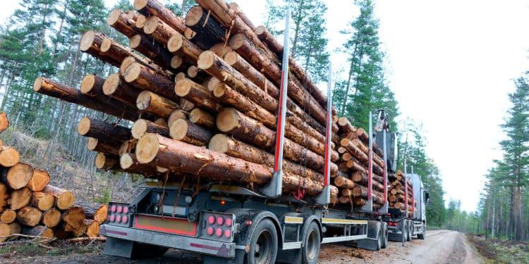 radioaktywne drewno ukraina