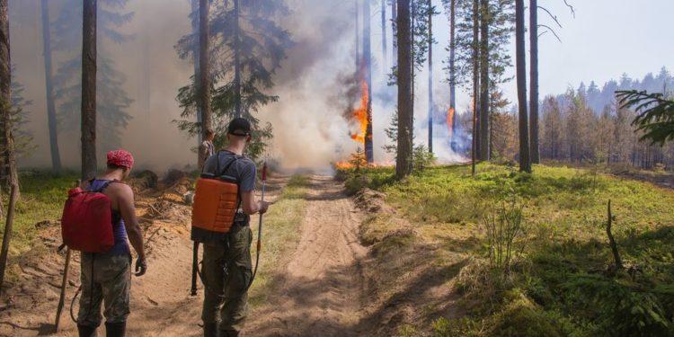 Pożary na Syberii. Rekordowy rok