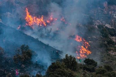 Pożar Lasów Algieria