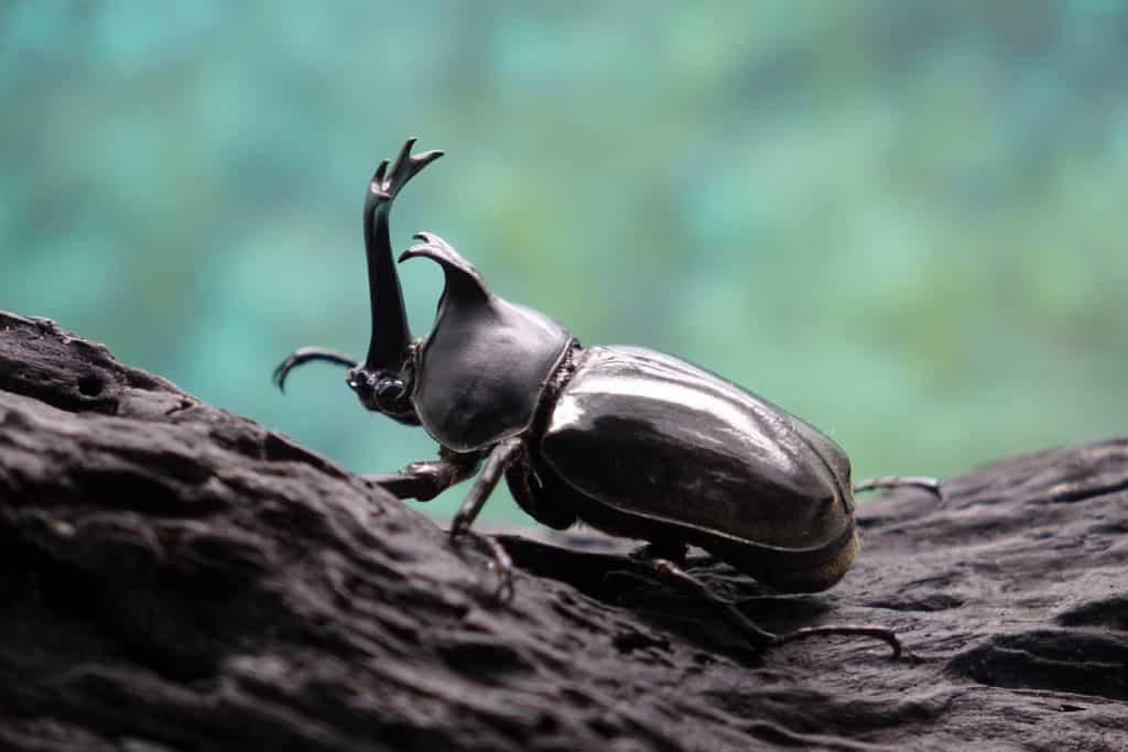 W wielu miejscach na świecie dramatycznie zmniejsza się liczebność i różnorodność owadów. Owady.