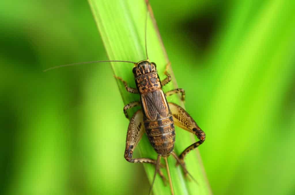 """Wśród źródeł problemy jest lubowanie się ludzi w """"utrzymywaniu porządku"""". Fot. Shutterstock/EncikAn owady"""
