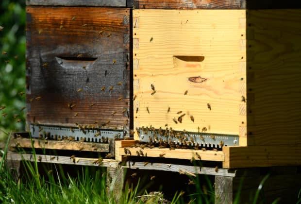 pszczoły mars