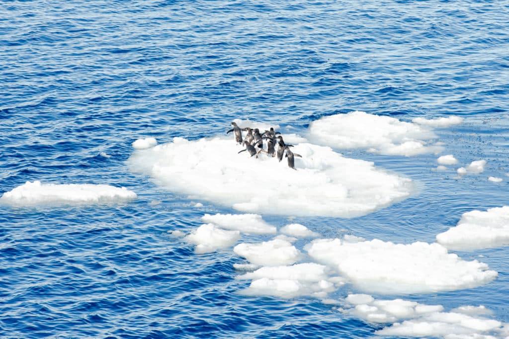 antarktyda pingiwny