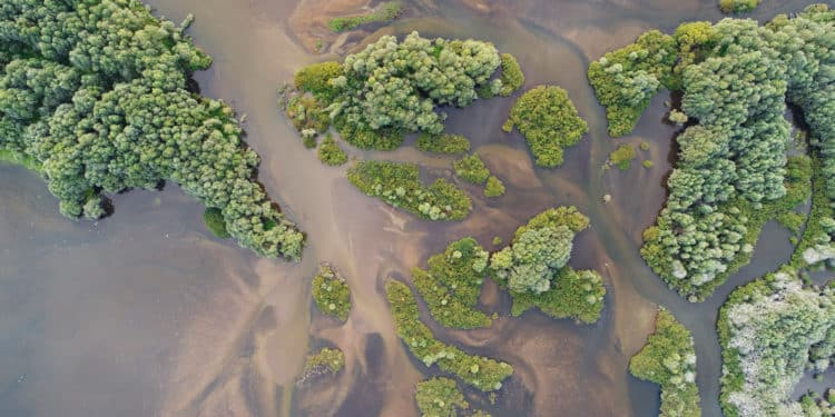 delta rzeki